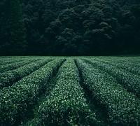 plantation-945400__180