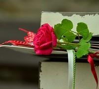 rose-889564__180